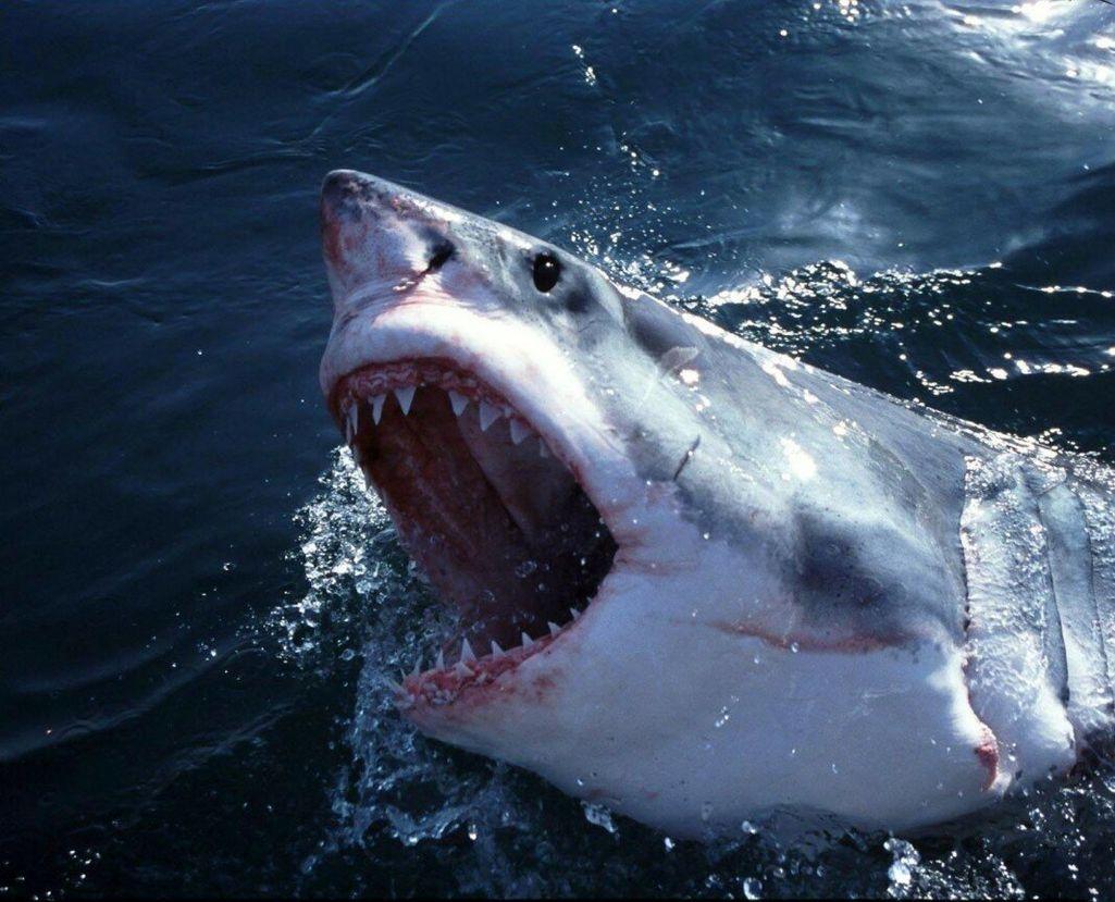 Нападение акулы в Египте