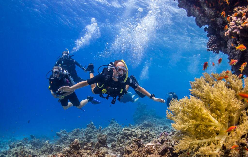 основы дайвинга в Красном море. групповое погружение