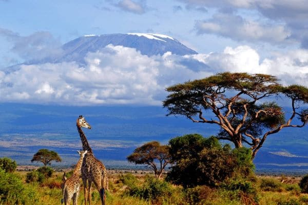 Новый вирус в Танзании обнаружен
