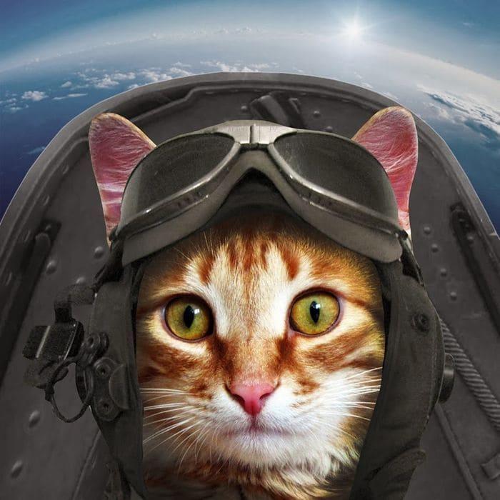 Кот напал на пилотов самолета
