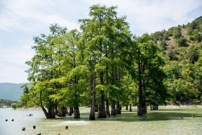 кипарисовое озеро в Анапе