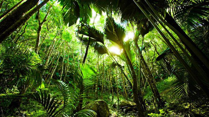 Что посмотреть на Сейшелах. Реликтовый палмовый лес на острове Прайслин